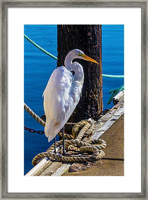 Great White Heron On Boat Dock Framed Print by Garry Gay