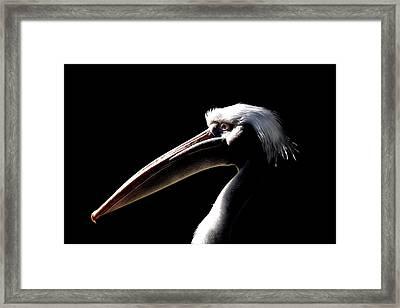 Great White Pelican Framed Print