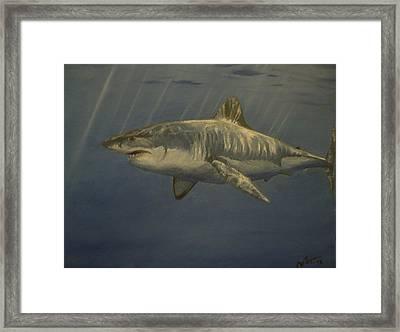 Great White Shark Framed Print by Alexandros Tsourakis