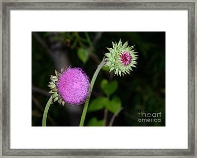 Family Of Wild Flowers Framed Print
