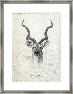 Greater Kudu Head Framed Print by House Brasil
