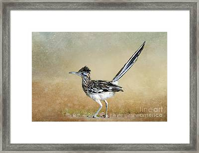 Greater Roadrunner 2 Framed Print by Betty LaRue