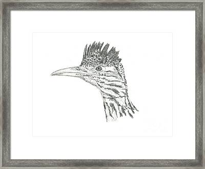Greater Roadrunner Framed Print