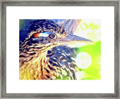 Greater Roadrunner Portrait 2 Framed Print
