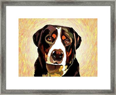 Greater Swiss Mountain Dog Framed Print by Alexey Bazhan