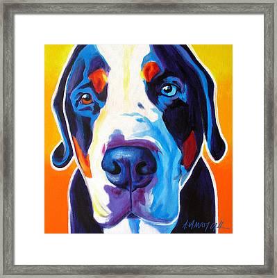 Greater Swiss Mountain Dog - Baron Framed Print
