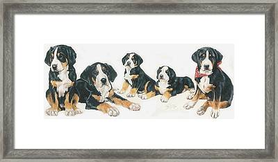 Greater Swiss Mountain Puppies Framed Print by Barbara Keith