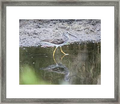 Greater Yellowleg Framed Print