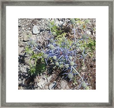 Greek Spiky Plant Framed Print
