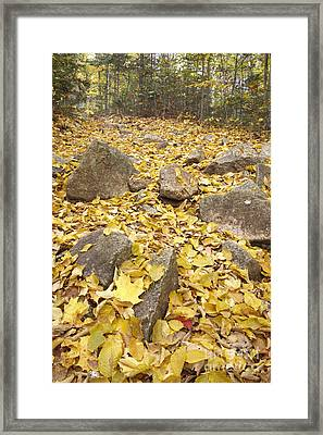 Greeley Ponds Scenic Area - White Mountains New Hampshire Usa Framed Print