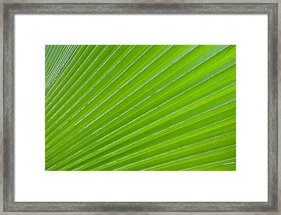 Green Abstract No. 1 Framed Print