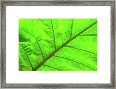 Green Abstract No. 5 Framed Print