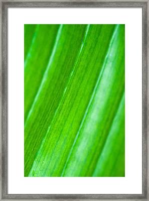 Green Abyss Framed Print