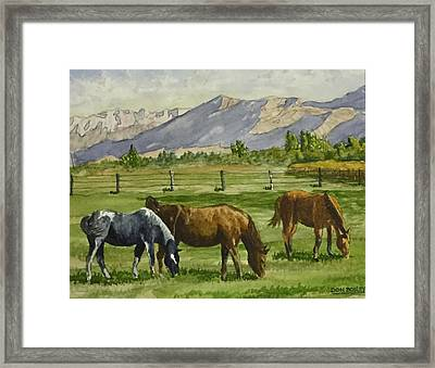 Green Acres Framed Print by Don Bosley