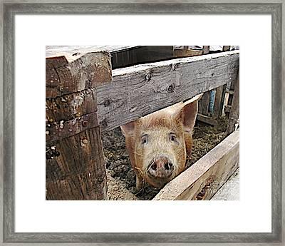 Green Acres Framed Print by Faith Harron Boudreau