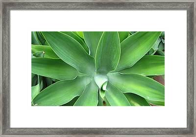 Green Agave Leaves Framed Print
