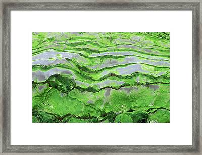 Green Algae Patterns On Exposed Rock At Low Tide, Gros Morne National Park, Ontario, Canada Framed Print