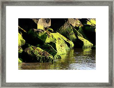 Framed Print featuring the photograph Green Algae by Paul SEQUENCE Ferguson             sequence dot net