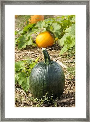 Green Among The Orange Framed Print by Christi Kraft