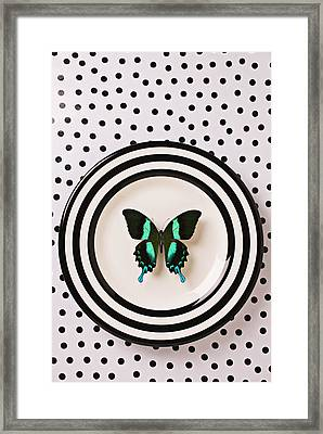 Green And Black Butterfly On Plate Framed Print by Garry Gay