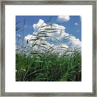 Framed Print featuring the photograph Green And Blue by Chris Feichtner