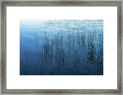 Green And Blue Serenity - Smooth Wetland Morning Framed Print by Georgia Mizuleva