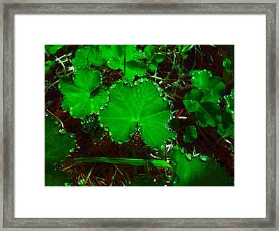 Green And Drops Framed Print