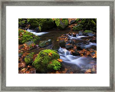 Green And Gold Framed Print