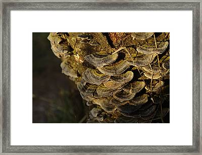 Green And Grey Fungus Framed Print