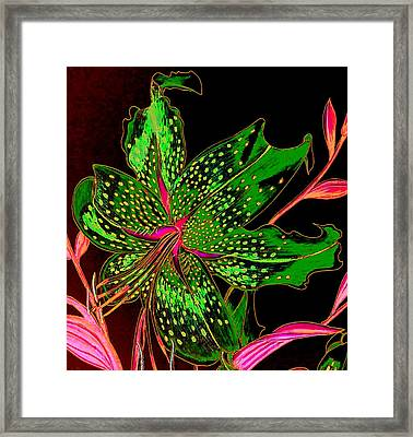 Green And Pink Stargazer Framed Print by Laura Wilson