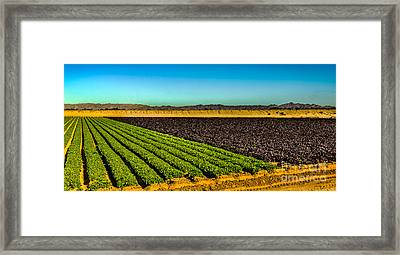 Green And Red Salad Bowl Framed Print