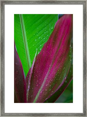 Green And Red Ti Plants Framed Print by Dana Edmunds - Printscapes