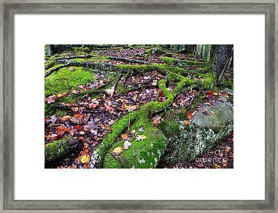 Green And Serene Framed Print by Thomas R Fletcher