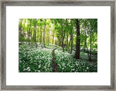 Green And White Kingdom Of Moisture Framed Print by Janek Sedlar