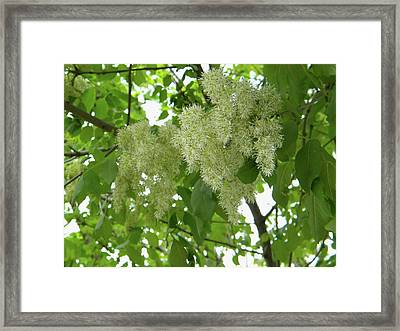 Framed Print featuring the photograph Green And White Photo by Manuela Constantin
