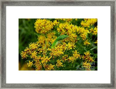 Green Anole Hiding In Golden Rod Framed Print