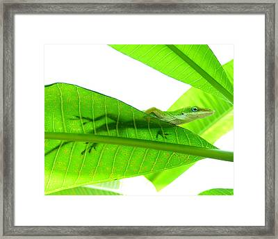 Green Anole On Leaf With Silhouette Framed Print by Joseph Connors