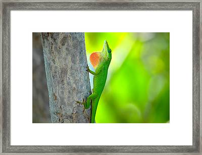 Green Anole Framed Print by Rich Leighton