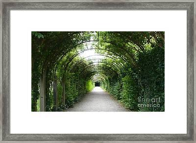 Green Arbor Of Mirabell Garden Framed Print by Carol Groenen