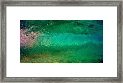 Green Awakening Framed Print by Brad Scott