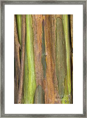 Framed Print featuring the photograph Green Bark 3 by Werner Padarin
