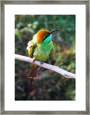 Green Bee Eater Framed Print by Balasubramanyam TR