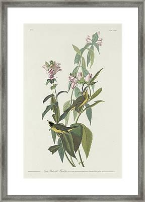 Green Black-capt Flycatcher Framed Print by Rob Dreyer