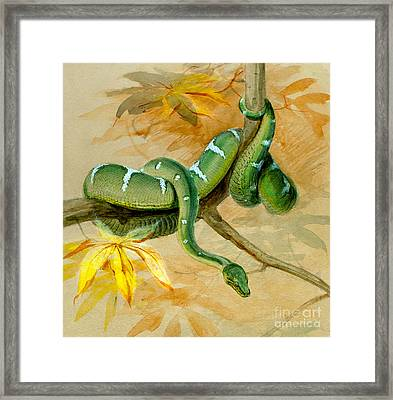 Green Boa Framed Print