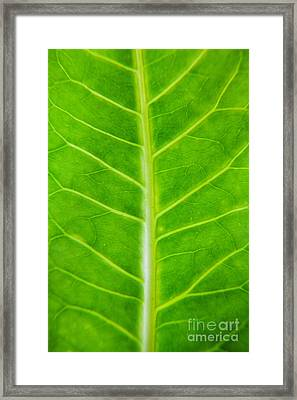 Green Botany -  Part 2 Of 3 Framed Print by Sean Davey