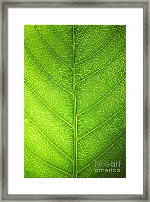 Green Botany -  Part 3 Of 3 Framed Print by Sean Davey