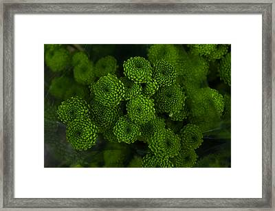 Green Brothers Framed Print by Jenny Rainbow