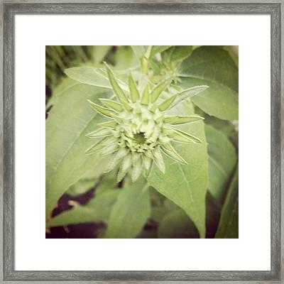 Green Bud Framed Print