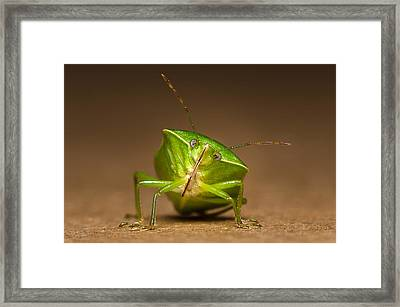 Green Bug Framed Print