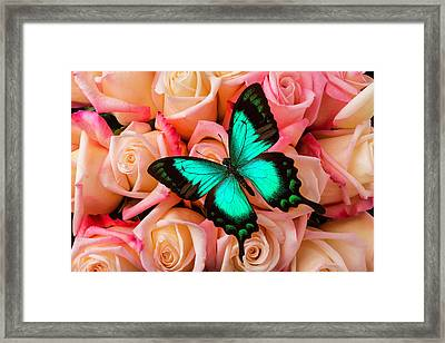 Green Butterfly On Pink Roses Framed Print by Garry Gay